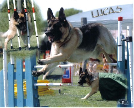 Agility is fun to train and compete in