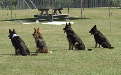 Advanced Obedience Training